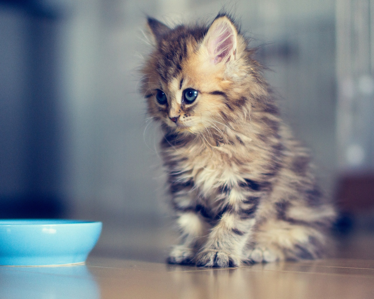Top 10 cutest kitten GIFs EVER! Yes, we just opened Pandora's box...