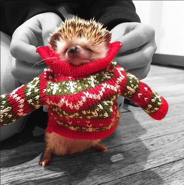 Best of ''Dress up your pet'' day - Did you dress your animal for the occasion?